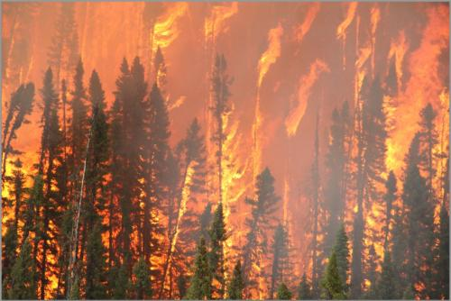 forest fires descriptive essay An example of a descriptive essay: tales round the campfire in descriptive essays, there is no underlying story to hold your composition together.