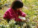 Alliah picking blueberries - Aug 21, 2004