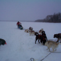 And here is our elder Donald Kakegamic coming in from the dog sled ride.