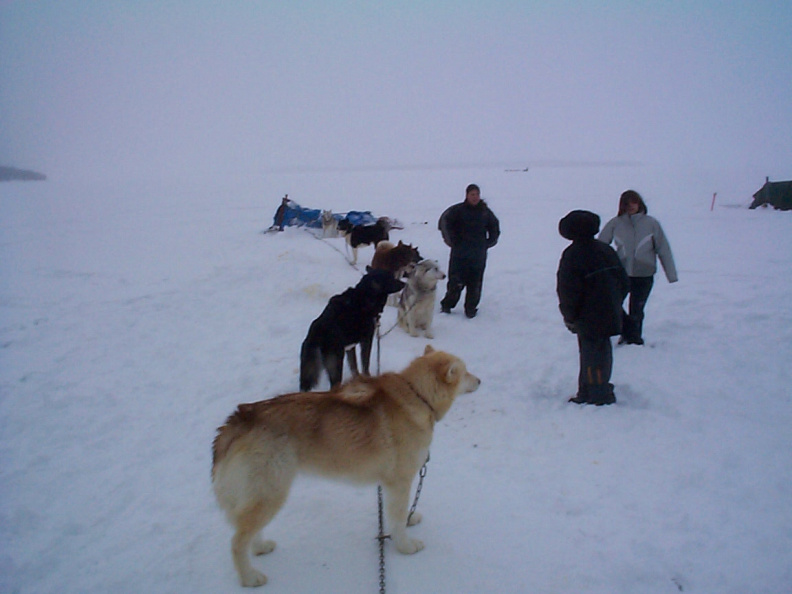 And here we have some Keewaywin Students visiting the dogs adn looking around.