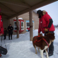 And here he is showing one of the students how the harness is hooked up to the dogs.