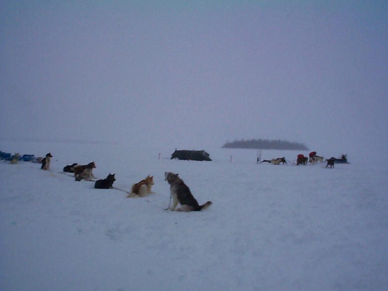 An other view of the camp and the dogs waiting for a ride.